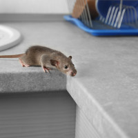 How To Pest-Proof Your House