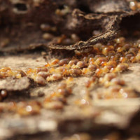 Warmer Weather Brings Termites
